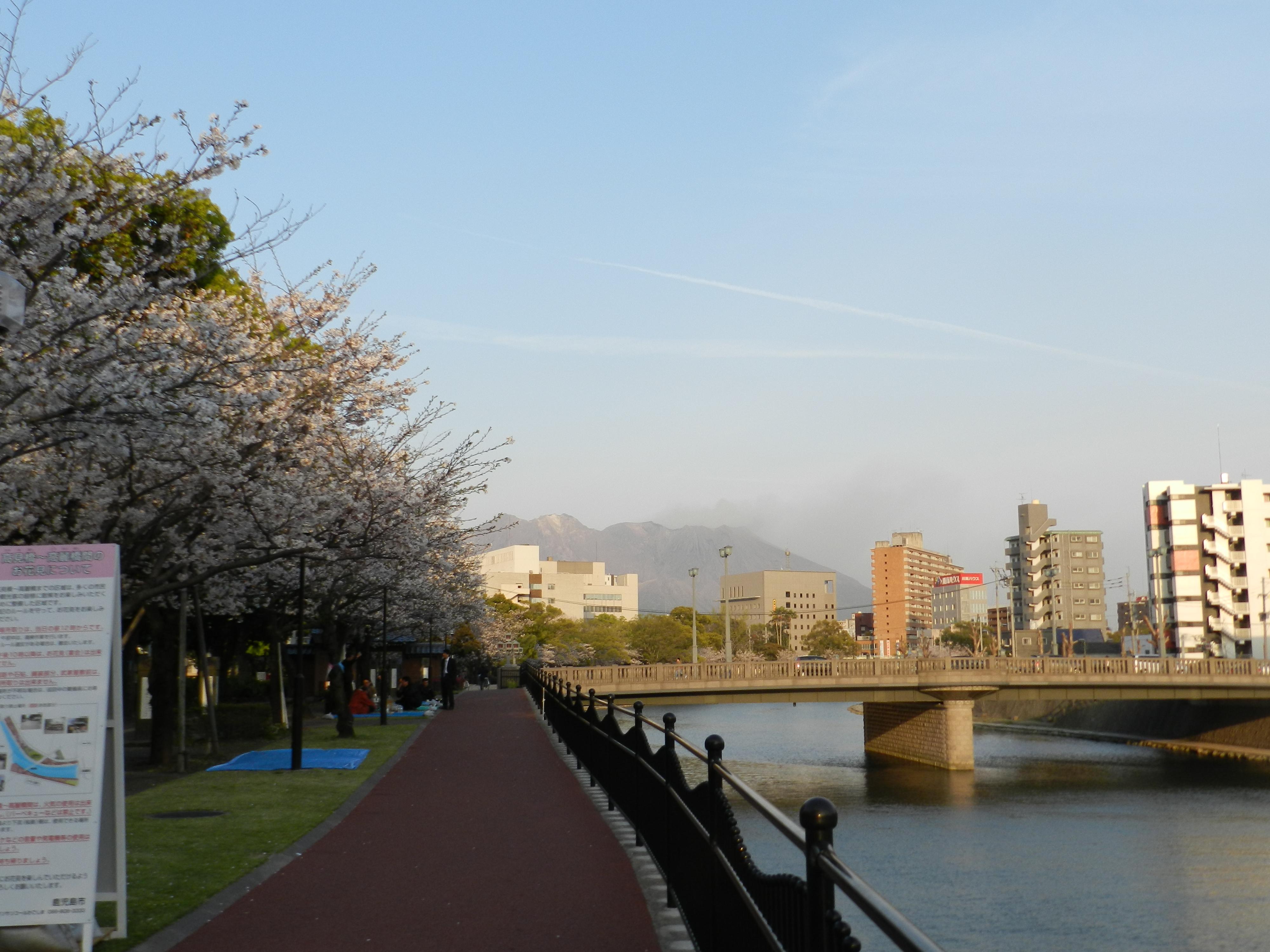 Musim semi di jepang part.2 sakura